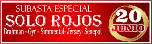 Sbta Solo Rojos 3